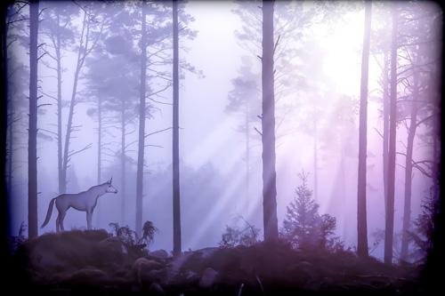 Einhorn im Wald